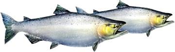 gimenes vitamini omega3 EPA DHA